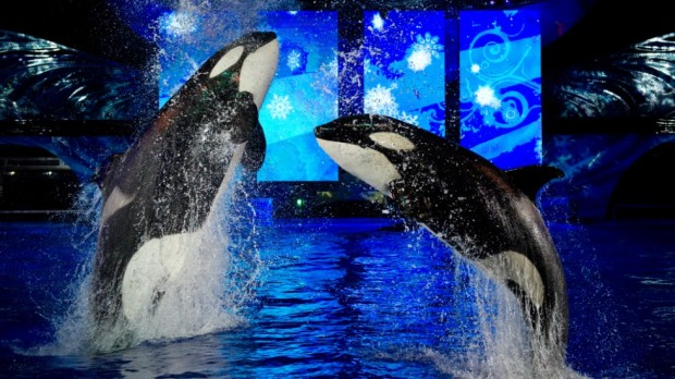 Shamu Miracles SeaWorld Christmas Celebration