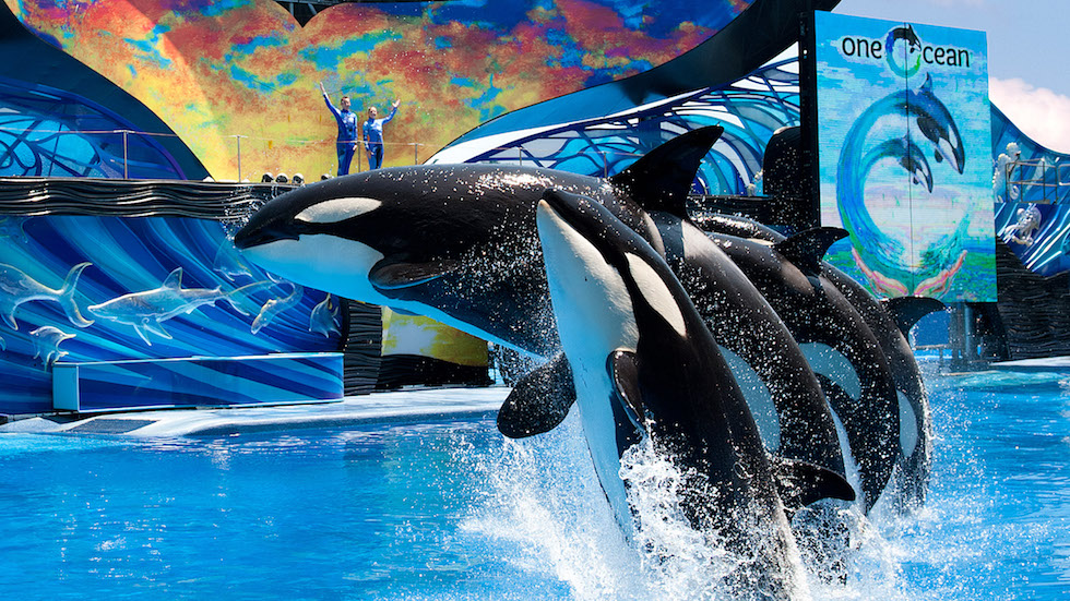 New ticket options available for SeaWorld and Busch Gardens