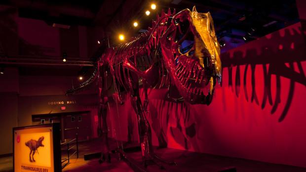 dinosaurs in motion tampa mosi exhibit