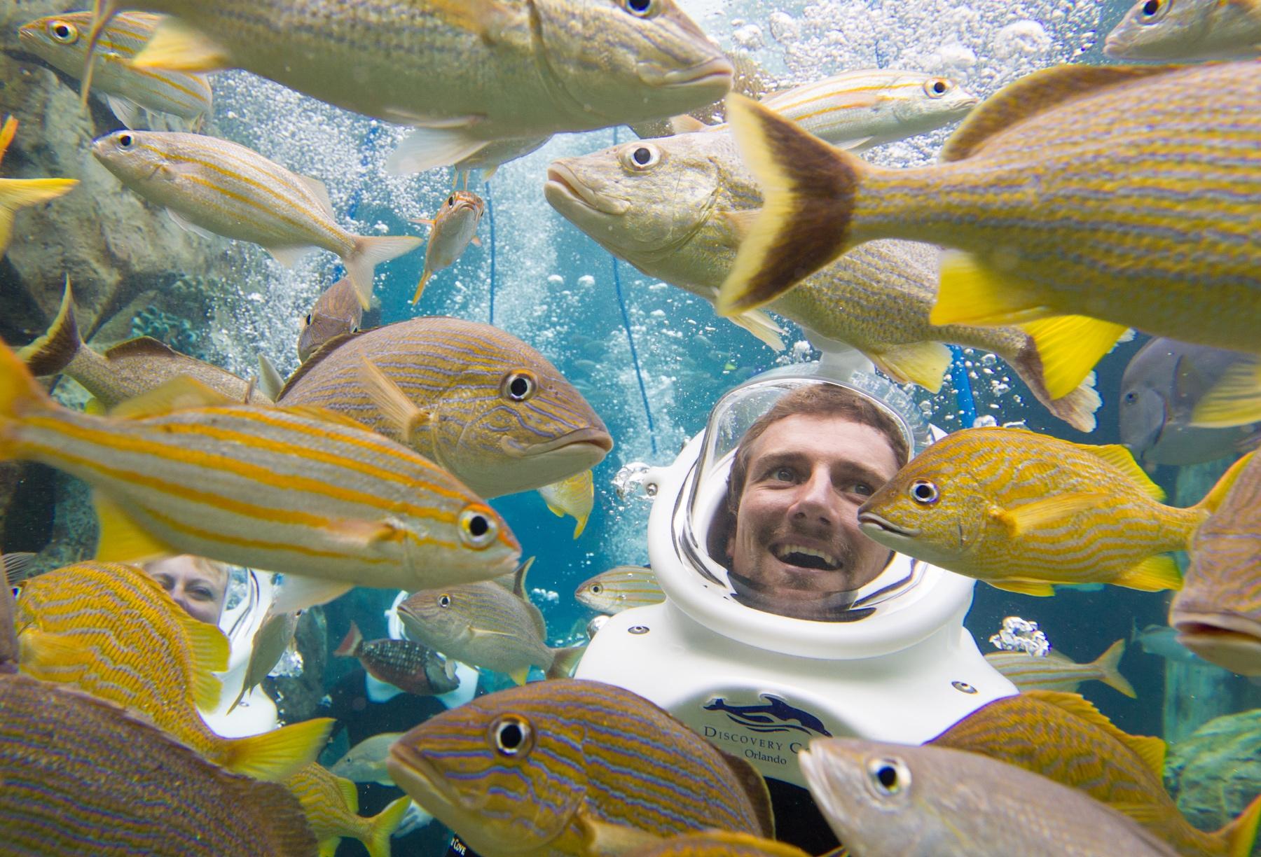 SeaWorld Discovery Cove Rising Tide Conservation SeaVenture
