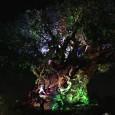 TreeOfLifeFeatured