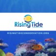 Rising Tide Conservation exhibit Busch Gardens Tampa
