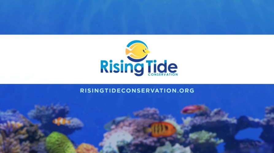Rising Tide Conservation exhibit Busch Gardens Tampa