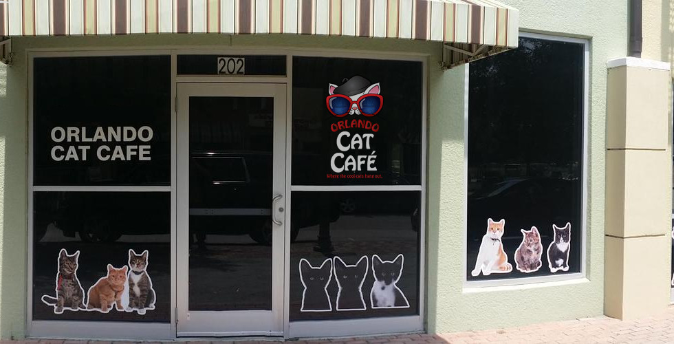 Cat Cafe Clermont Florida