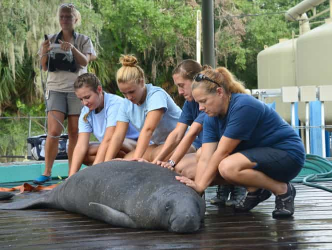 tlpz-manatee-hospital-1-by-dave-parkinson