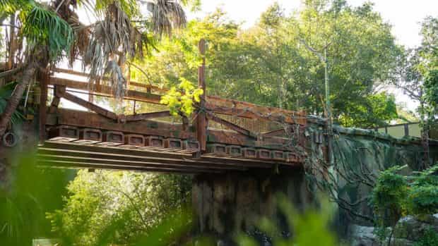 pandora avatar bridge disney animal kingdom