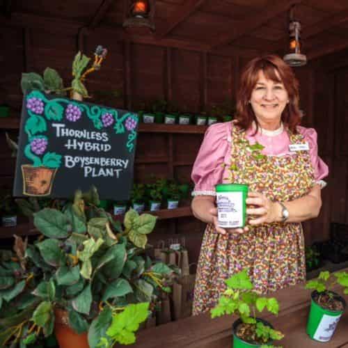 boysenberry-plants