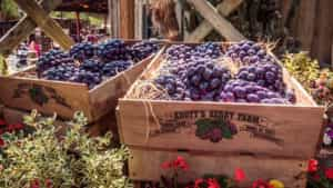 Knott's Berry Farm Boysenberry Festival returns April 1-23