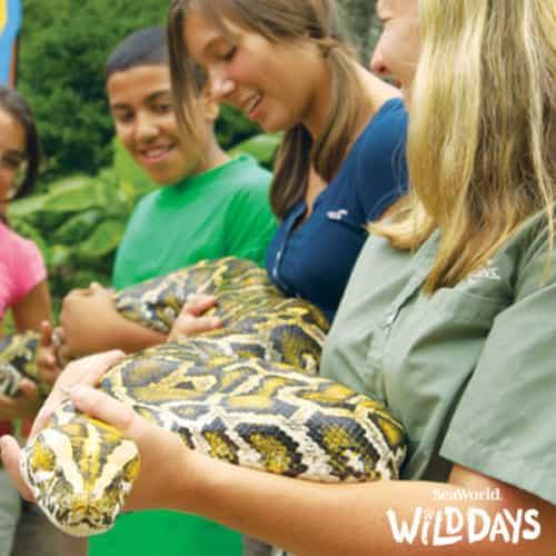 Snake_Wild Days
