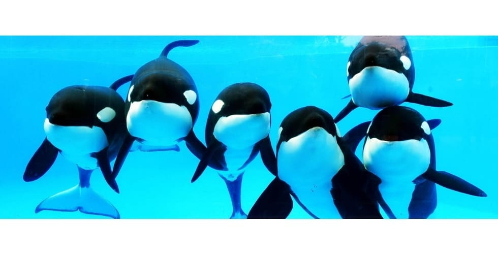 killer whale trainer talk