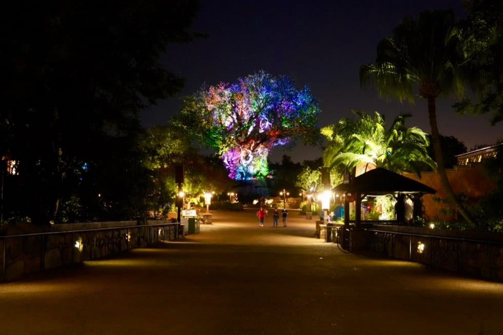 tree of life at night