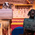 Busch Gardens Tampa's new animal show to debut Feb. 24