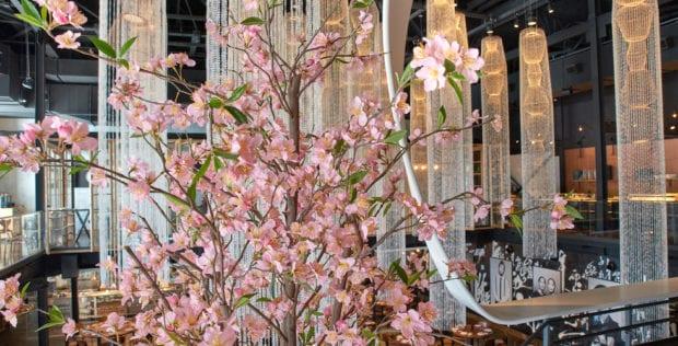Morimoto Asia Sakura Festival