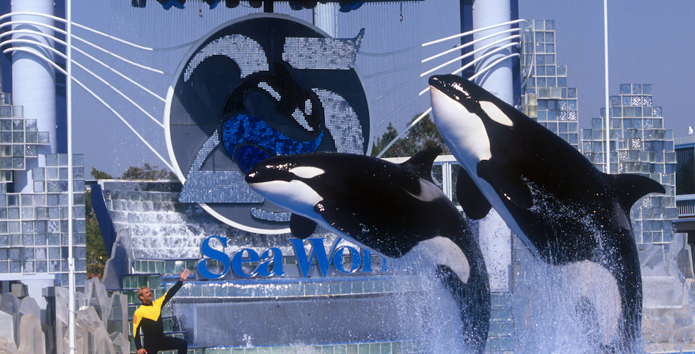 Seaworld San Diego Celebrates 55 Years With In Park Offers Activities