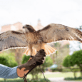 Grande Lakes Orlando adds falconry to outdoor sports offerings