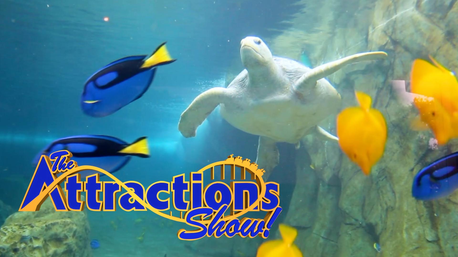The Attractions Show Turtle Reef At Seaworld San Antonio