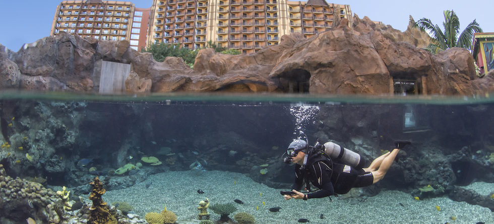 New Up Close Encounters at Rainbow Reef debut at Aulani Resort
