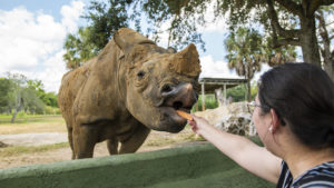 New sloth, rhino encounters now at Busch Gardens Tampa Bay