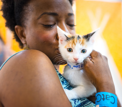 CatCon 2019 Pasadena kitten adoptee