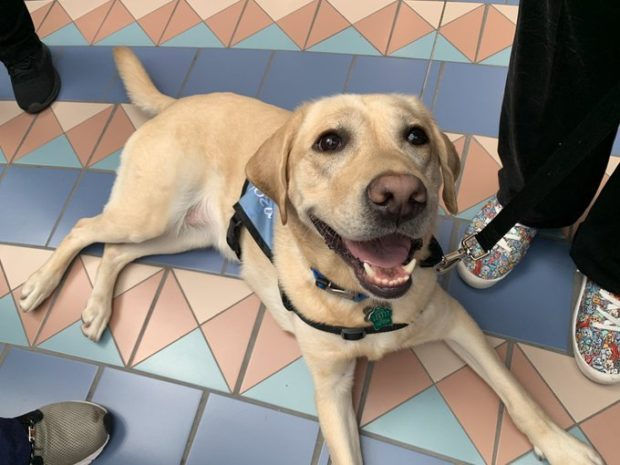 Orlando International Airport Launches New Mco Paw Pilots Therapy Dog Program