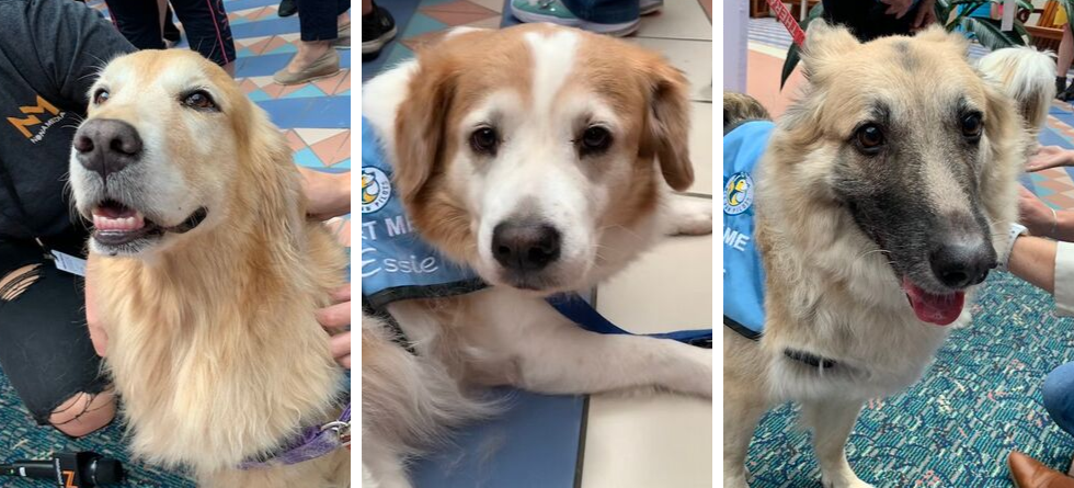 Orlando International Airport launches new 'MCO Paw Pilots' therapy dog program