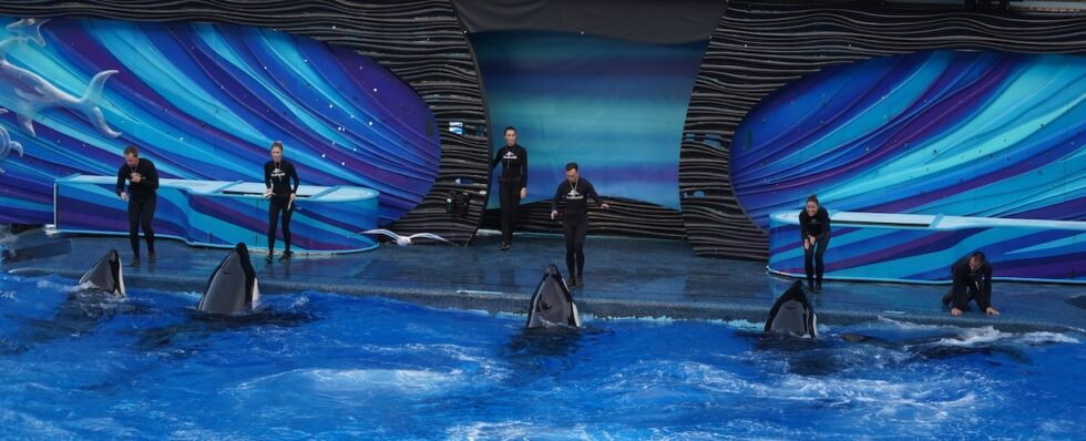 SeaWorld trainers with killer whales