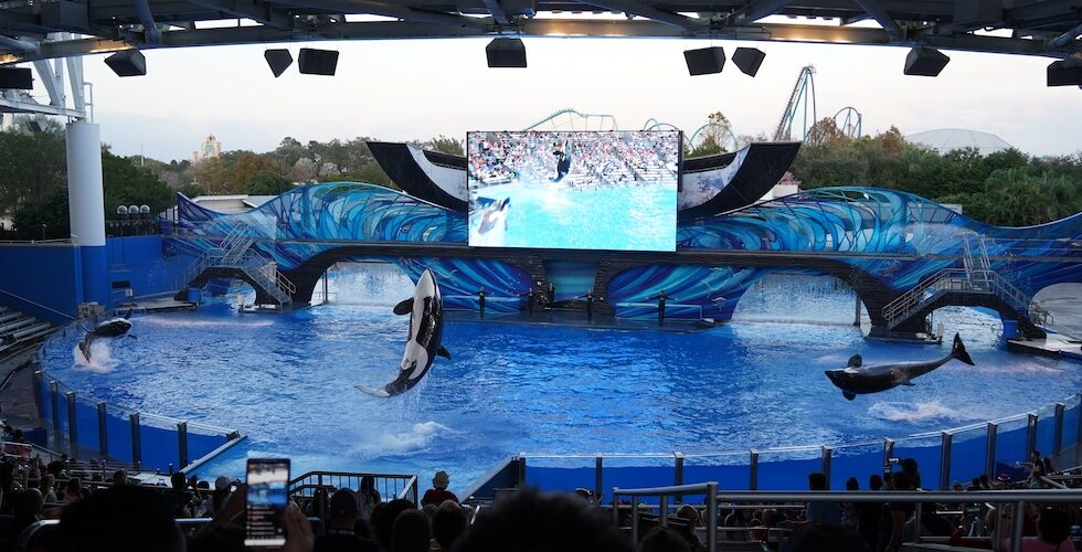 Orca Encounter show at SeaWorld Orlando