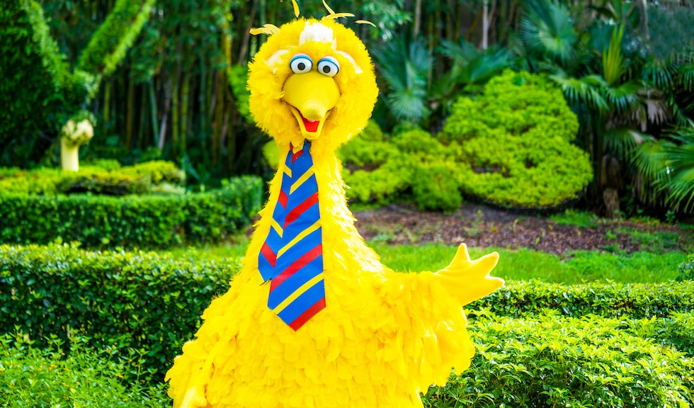 Busch Gardens Tampa Bay, Big Bird, Sesame Street