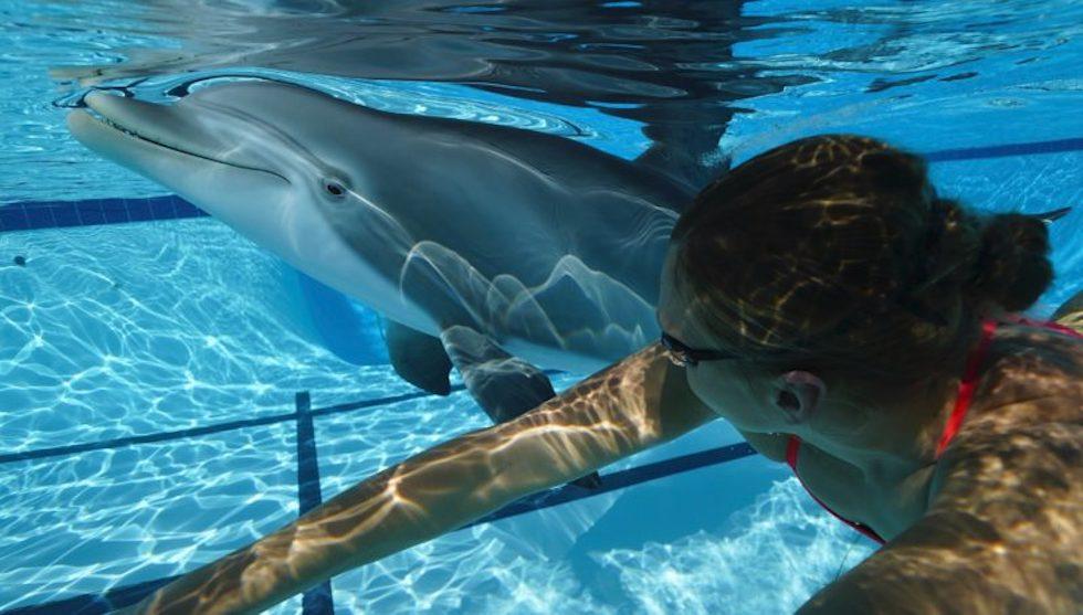 robotic dolphin
