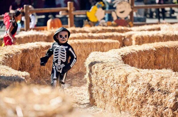 Tricks And Treats Fall Fest, Cedar Point, Kings Island, Halloween, Fall Festival, costume contest, maze