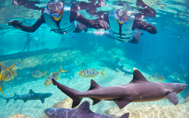 Discovery Cove Orlando, Shark Swim