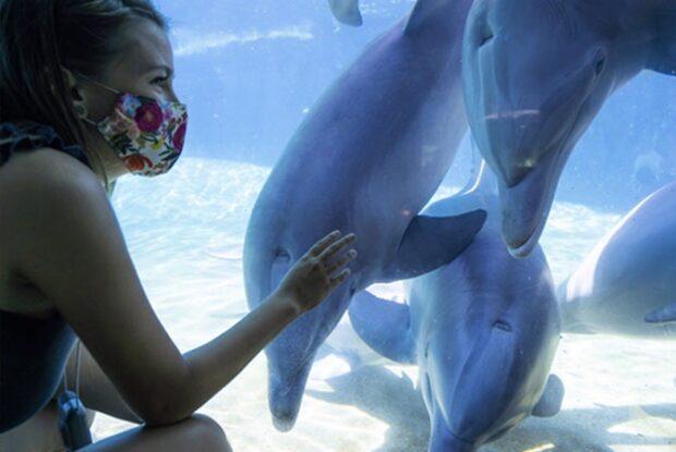 SeaWorld San Diego, Annual Pass, Dolphin