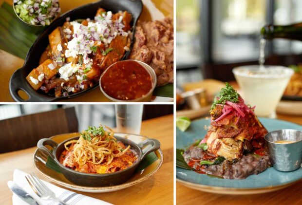 Weekday Dining Offer, Frontera Cocina, red chile enchiladas, garlicky mushroom and eggplant tacos, cochinita pibil, sparkling margarita