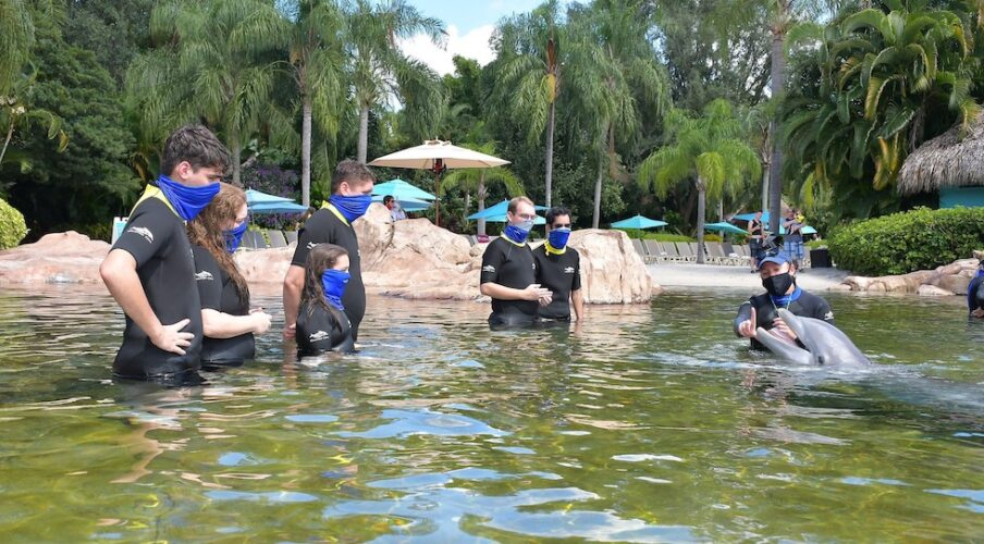 Dolphin experience at Discovery Cove.
