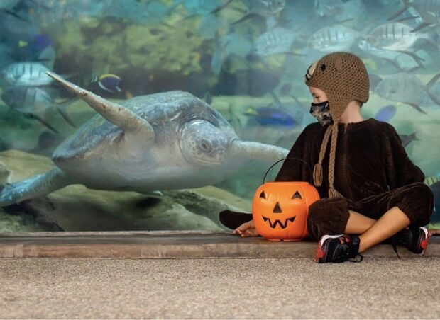 SeaWorld San Diego, Halloween Spooktacular
