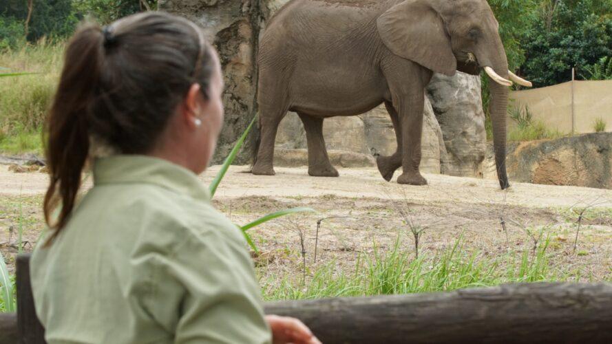 Magic of Disney's Animal Kingdom animal keeper with elephant