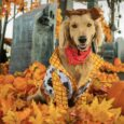 Celebrate 'Howl-o-ween' with Disney-themed pet costumes