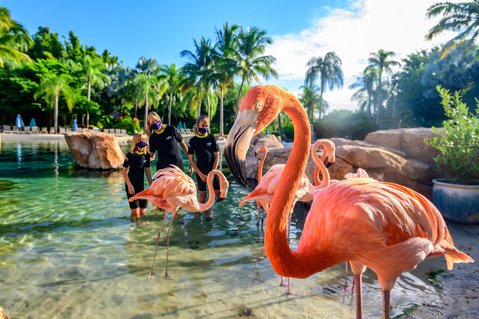 flamingo mingle