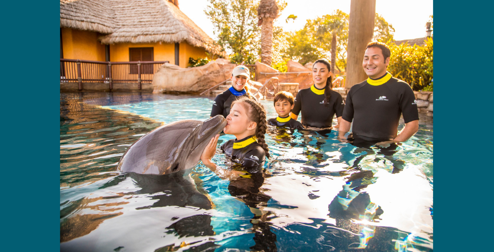 SeaWorld San Antonio now offers free admission to Texas teachers and preschoolers.