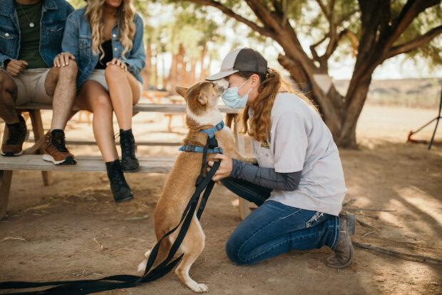 camel safari ranch New Guinea singing dog