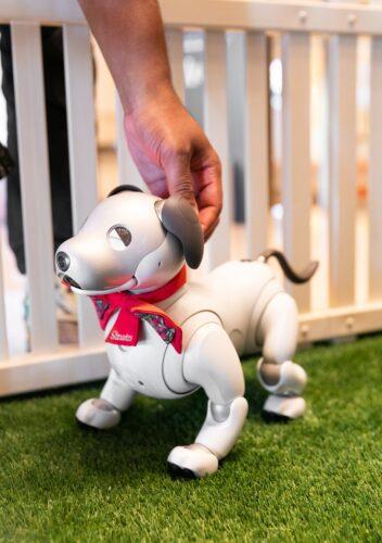 Robotic puppy Sinatra
