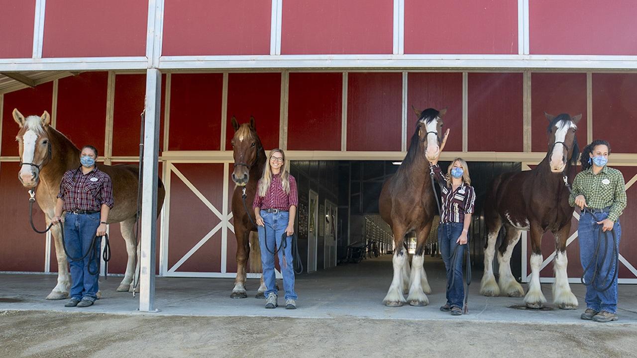New Disneyland Horses